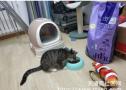 爱吃粮不吃鱼的傻猫!