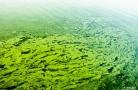 天通艺园的湖面已经严重污染,臭味很浓