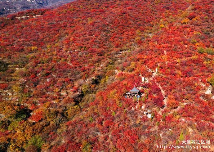 抓住秋天的尾巴,赏京秋最后两周的红叶盛宴!